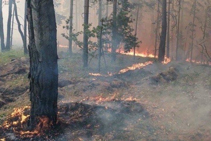 В Ульяновской области потушили 34 лесных пожара, фото-1