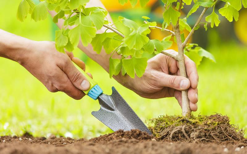 Субсидии на озеленение дворов получают ульяновские ТСЖ и ЖСК, фото-1