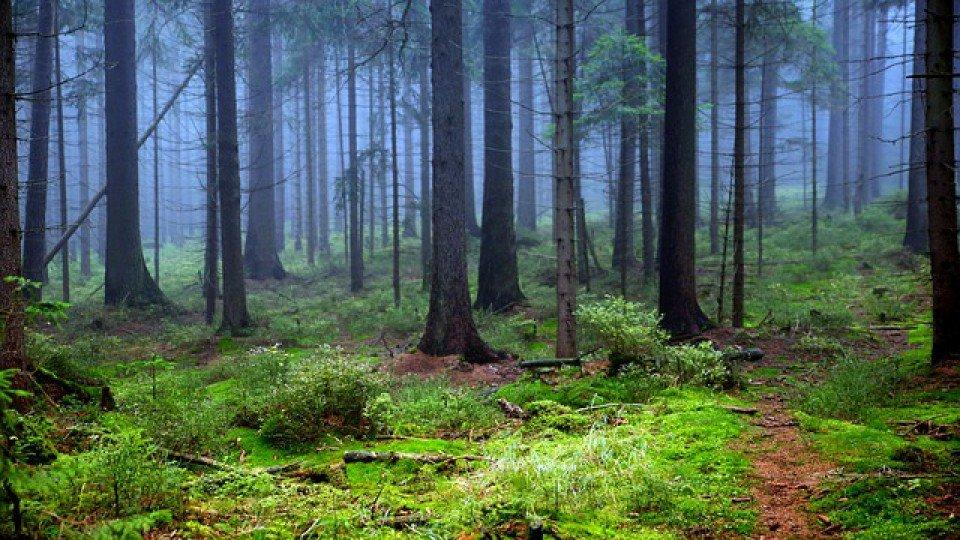 Для обеспечения пожарной безопасности будет усилено патрулирование в лесах Ульяновской области, фото-1
