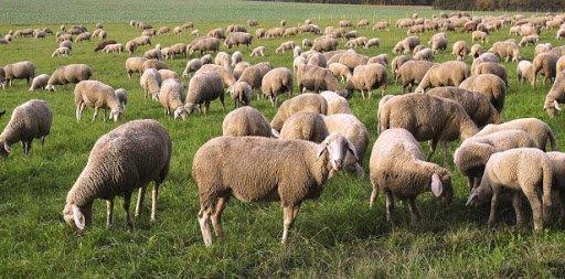 Фермер-мошенник обманул жительницу Ульяновска, фото-1
