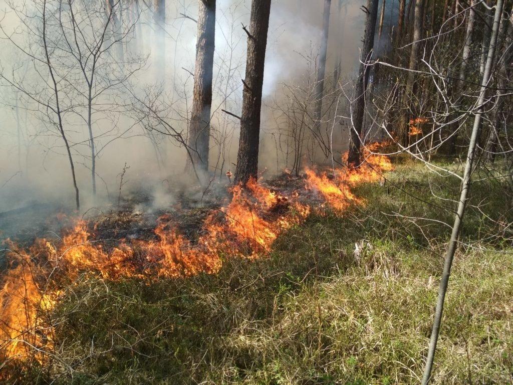 Пожароопасный сезон объявлен в лесах Ульяновской области, фото-1