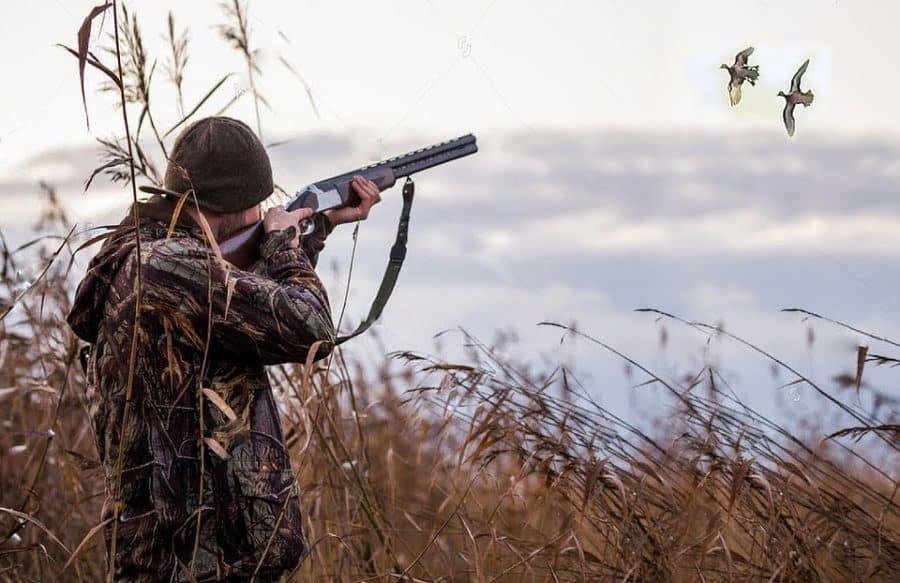 Охота на птиц открыта в Ульяновской области, фото-1