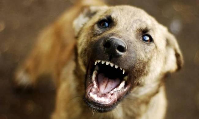 В Ульяновске ребенка покусала бродячая собака, фото-1