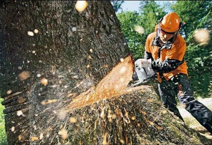 76 аварийных деревьев спилили в первую неделю лета в Ульяновске, фото-1