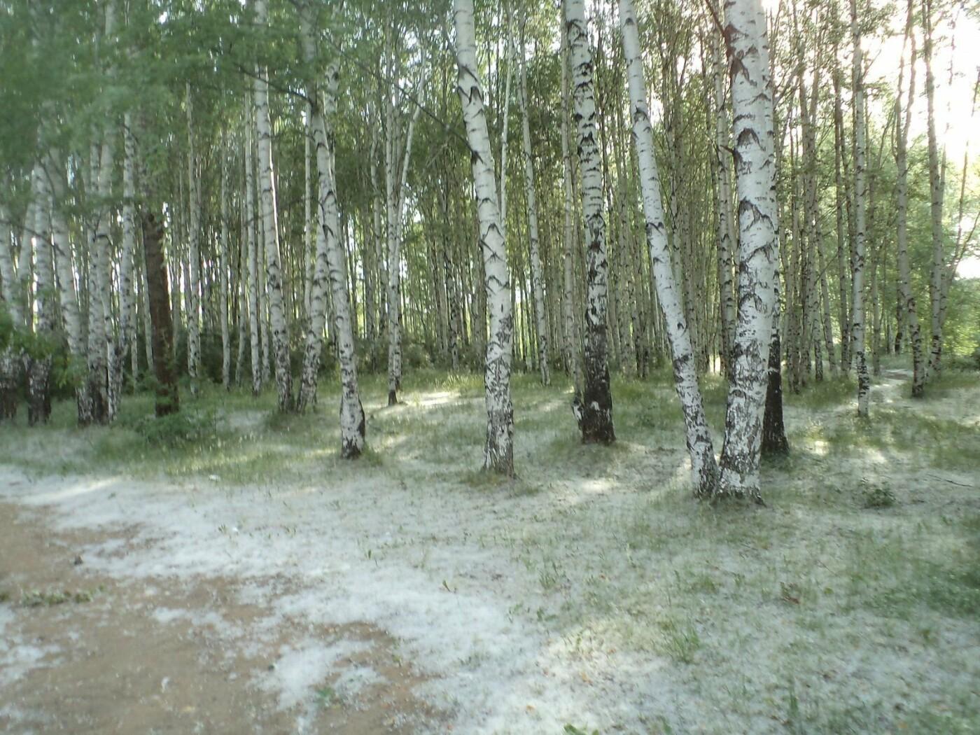 В Ульяновске вместо тополей посадят другие деревья, фото-1