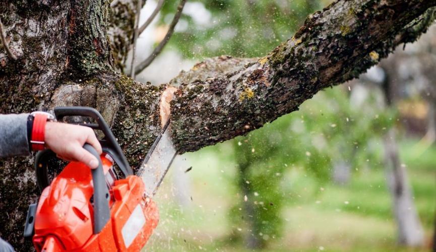 Более 200 аварийных деревьев снесут в Ульяновске, фото-1