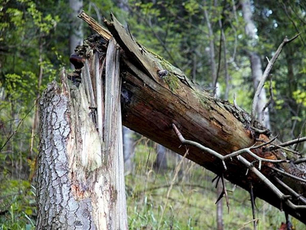 111 аварийных деревьев убрали в Ульяновске, фото-1