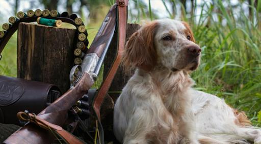 Охота с подружейными собаками на болотно-луговую дичь открыта в Ульяновской области, фото-1