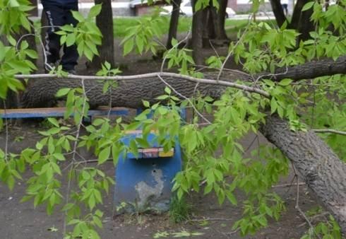 Ещё 93 аварийных дерева убрали за неделю с улиц Ульяновска, фото-1
