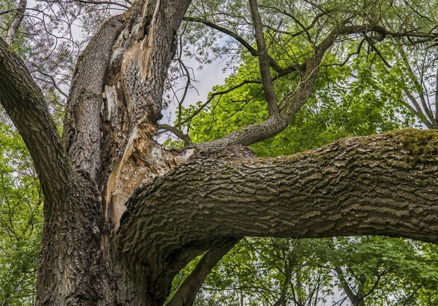 132 аварийных дерева спилили в Ульяновске, фото-1